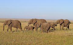 Masai Mara X