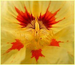 Maserung einer Blume