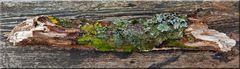 Maserungen und Flechten auf totem Holz