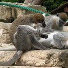 Massaggio di gruppo