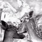 ... maternal kiss
