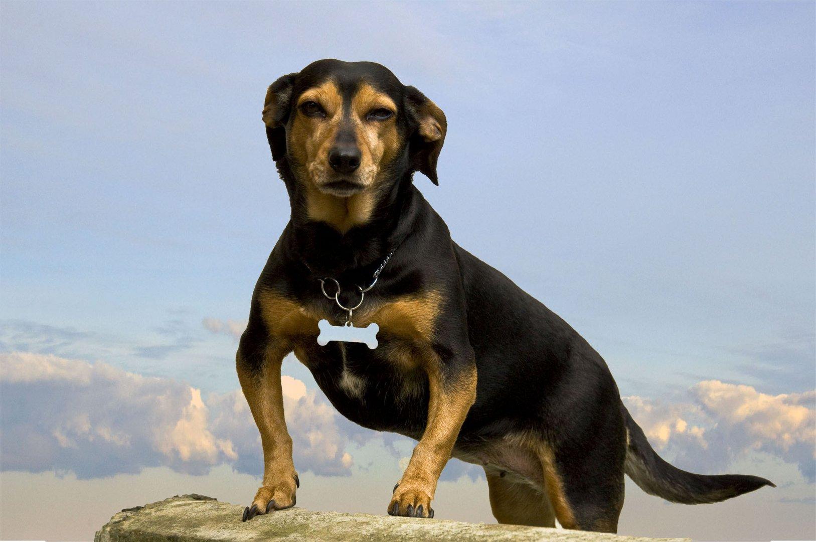 Matilda, il piccolo cane fiero