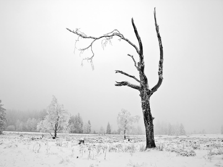 matin brûmeux - Nebelmorgen