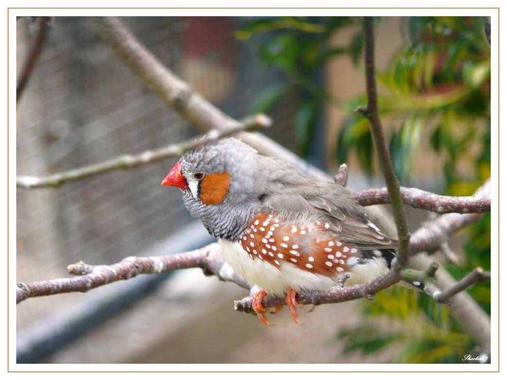 Maître oiseau sur son arbre perché !