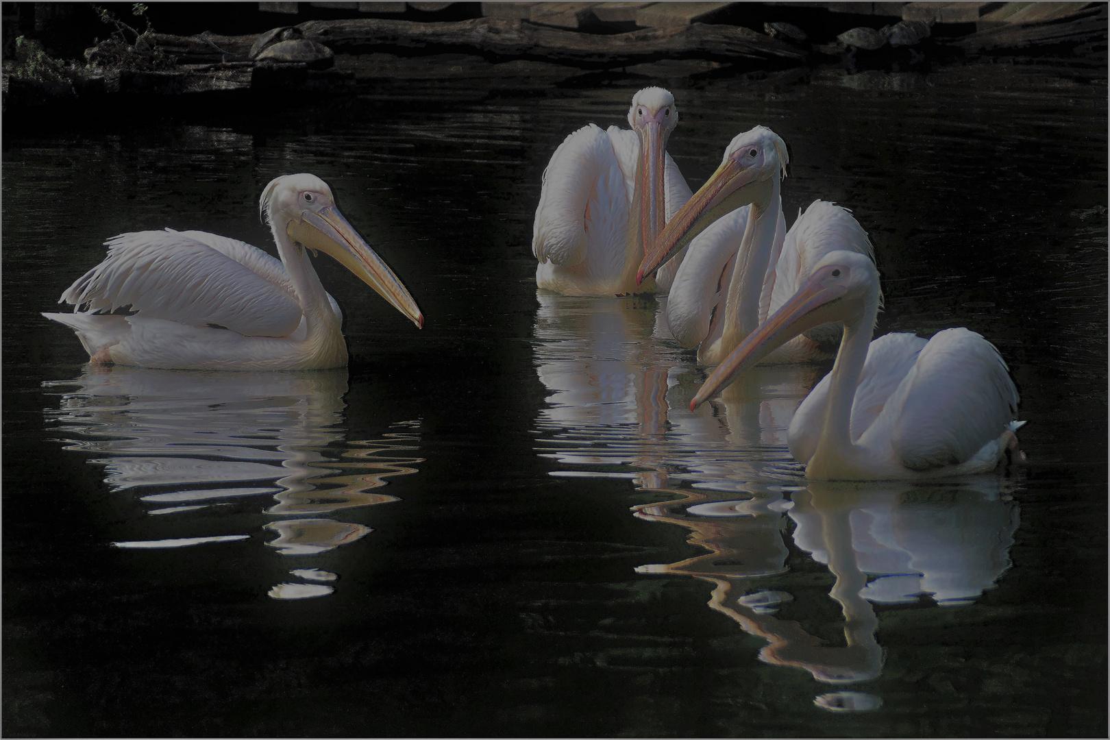 Maître Pélican et ses 3 élèves.....