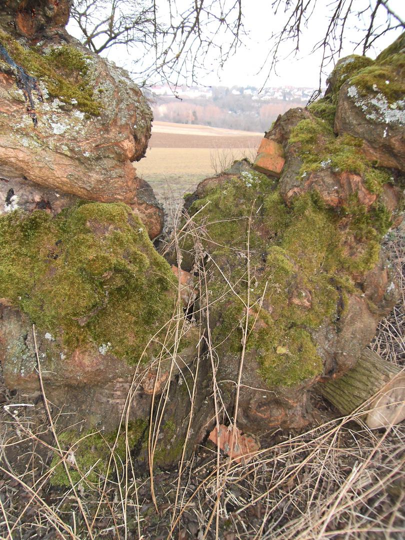 Mauersteine in Baum