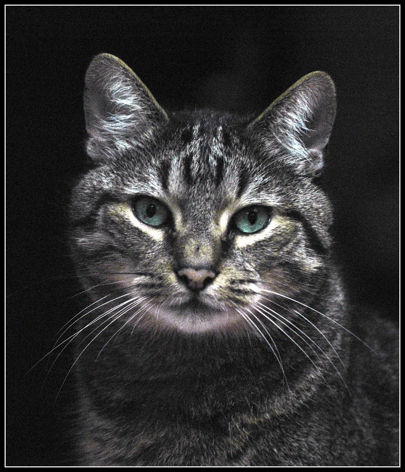 Maurice , le chat