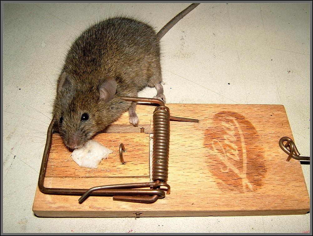 Maus im Haus Weg Maus Foto & Bild