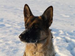 Mausi im Schnee