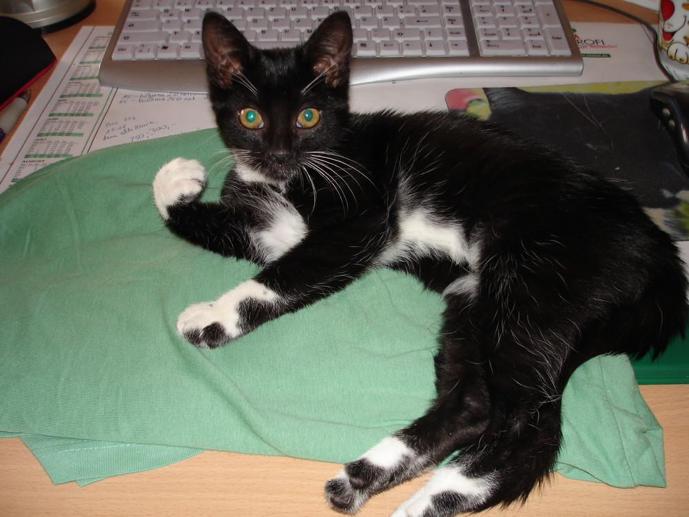 Mausi, Katze Nr. 3