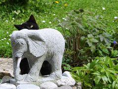 Mausi und der Elefant