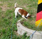 mausiiii - wo bist du ????-will doch blos spielen :-)))schmatz !!!!