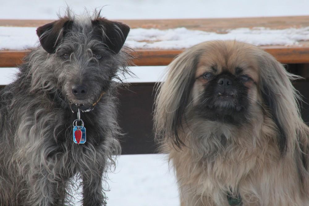 Max & Gizmo