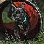 Max im Hundekindergarten