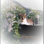 Maxi auf dem Vogelhaus...
