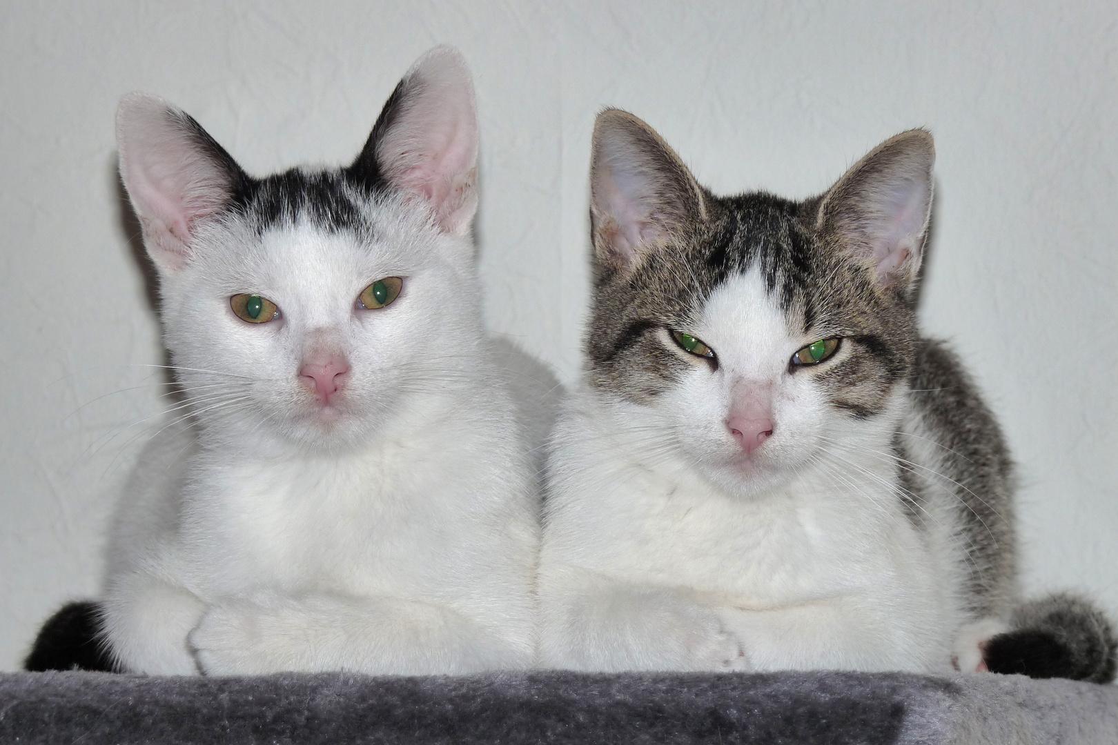 Maxi und Moritz