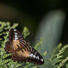 Maximilianpark Schmetterlingshaus