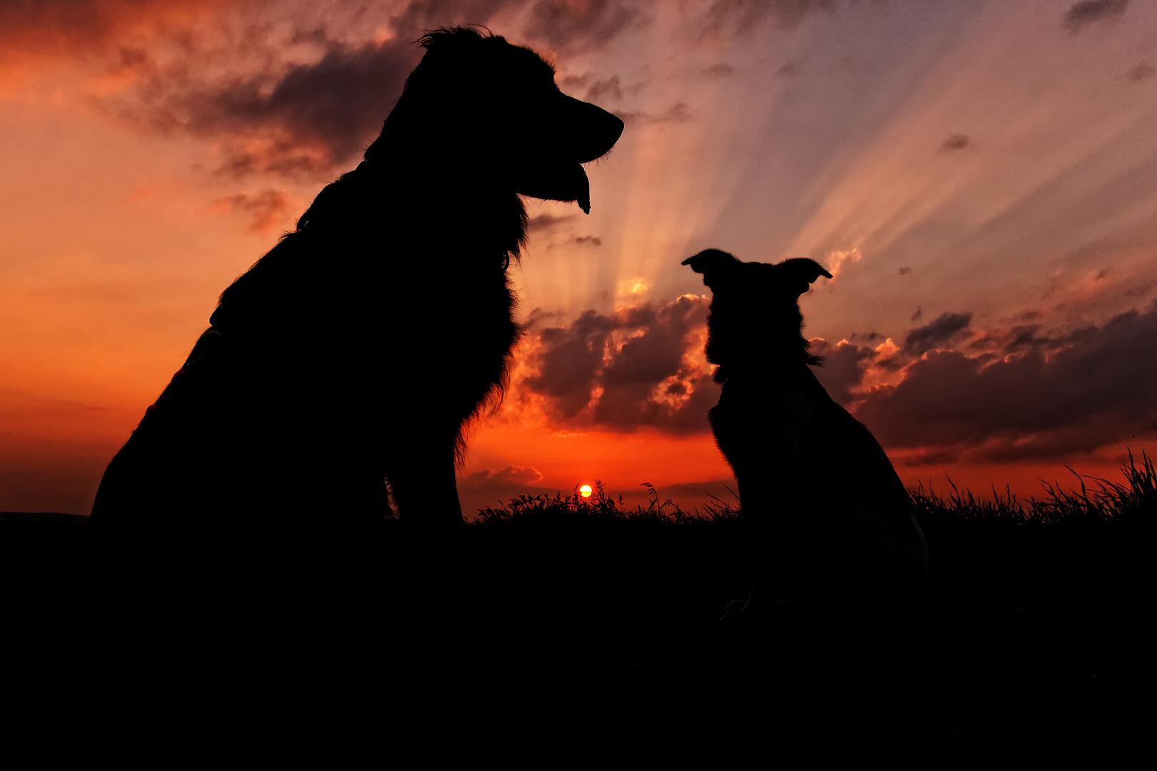 Maxx & Lino Sunset