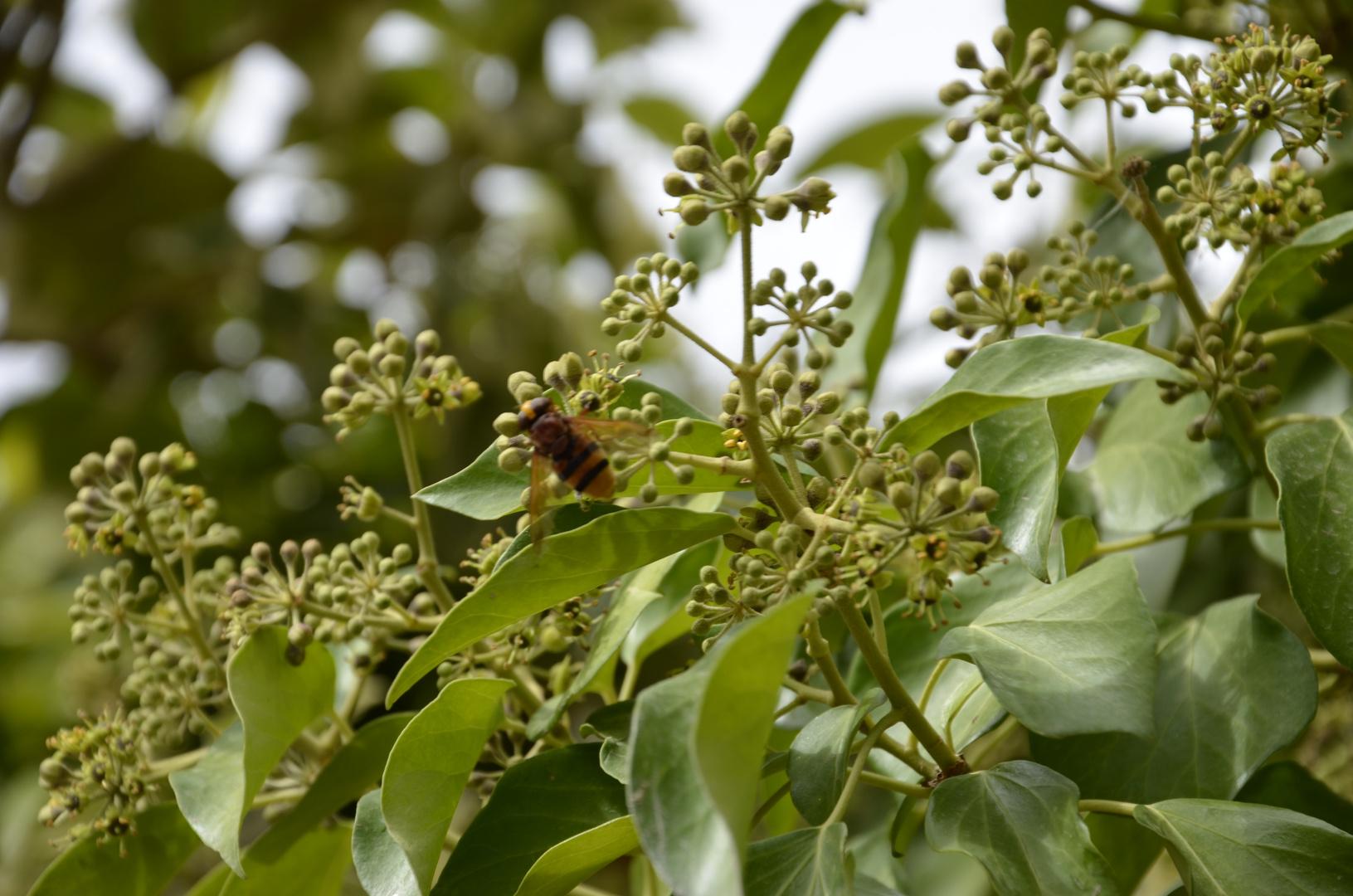 Maya, la abeja.