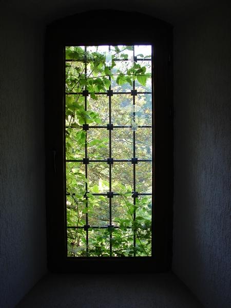 Maybe Windows!?