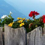 Mazoner Alm in Südtirol