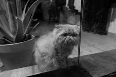 Me pareció ver a un lindo gatito ...