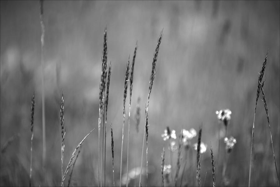 Meadow blade