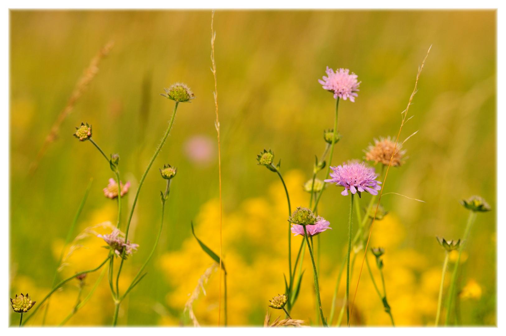 meadow melodies VII