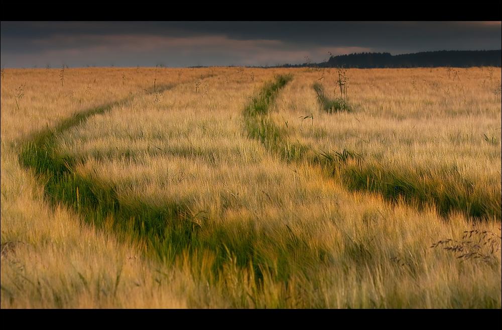 .:Meadowlarks:.