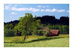 Meadows - Wiese