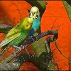 Mecklenburg | bird park Marlow |