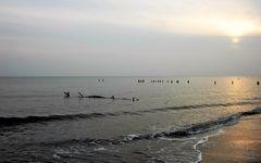 Mecklenburger Seeschlange