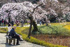Méditation au pied de Sakura