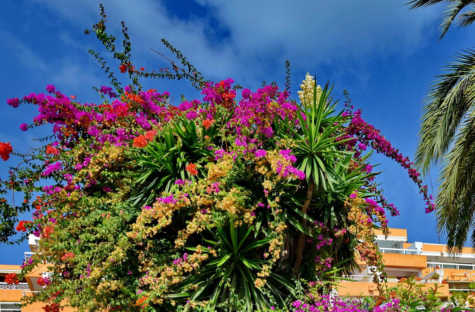 Mediterraner Blumengruß