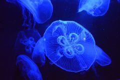 Medusa quadrifoglio