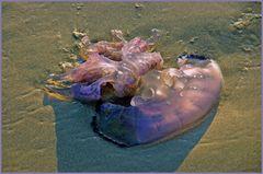 méduse à peine échouée.....