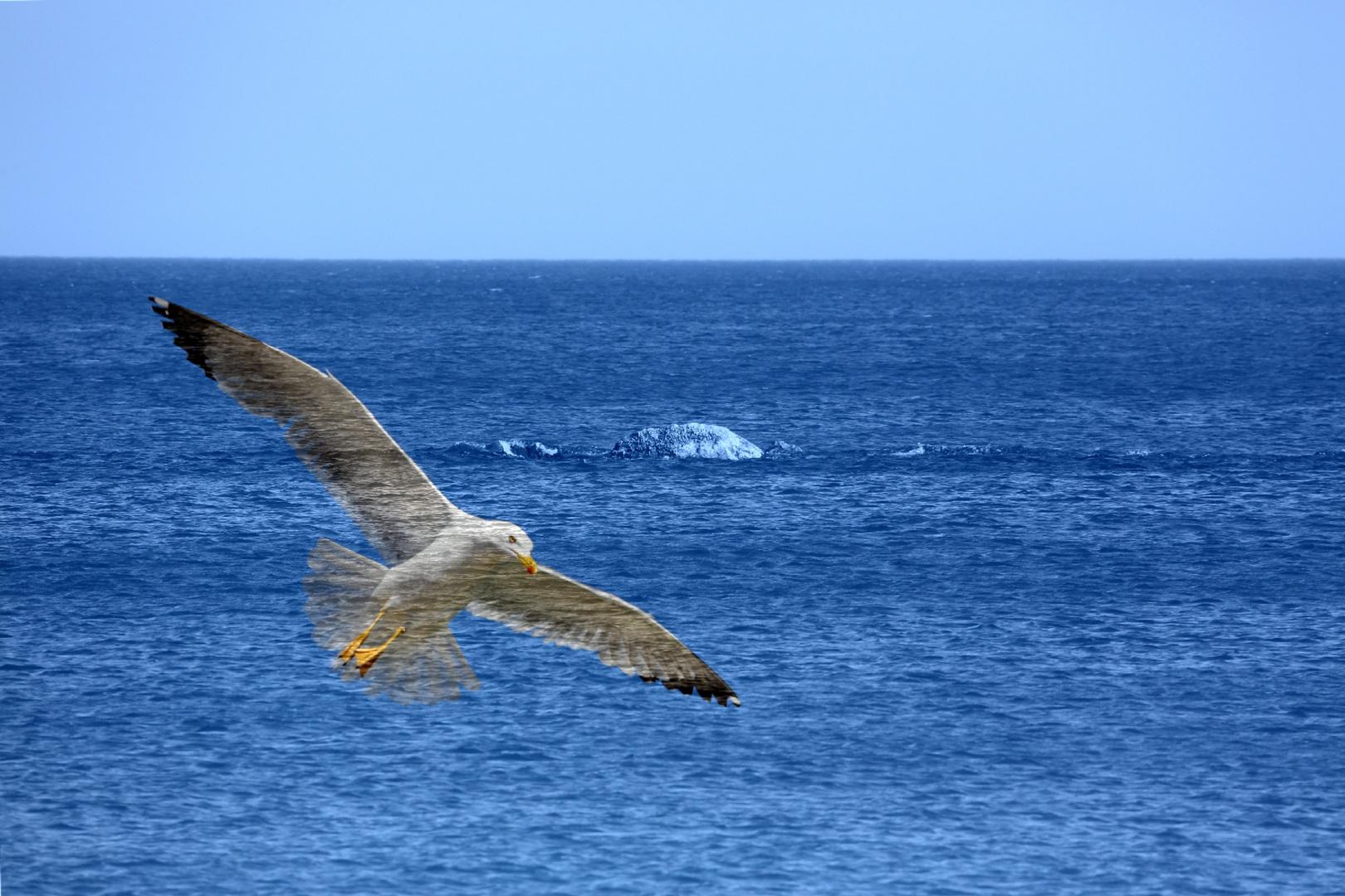 Meer und Moewe...