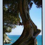 _+_+_+_+_= Meerblick mit Baum in Latium
