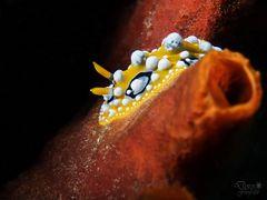 Meeres - Glühen (2)