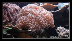 Meeresblumen