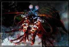 Meeresfrüchtchen