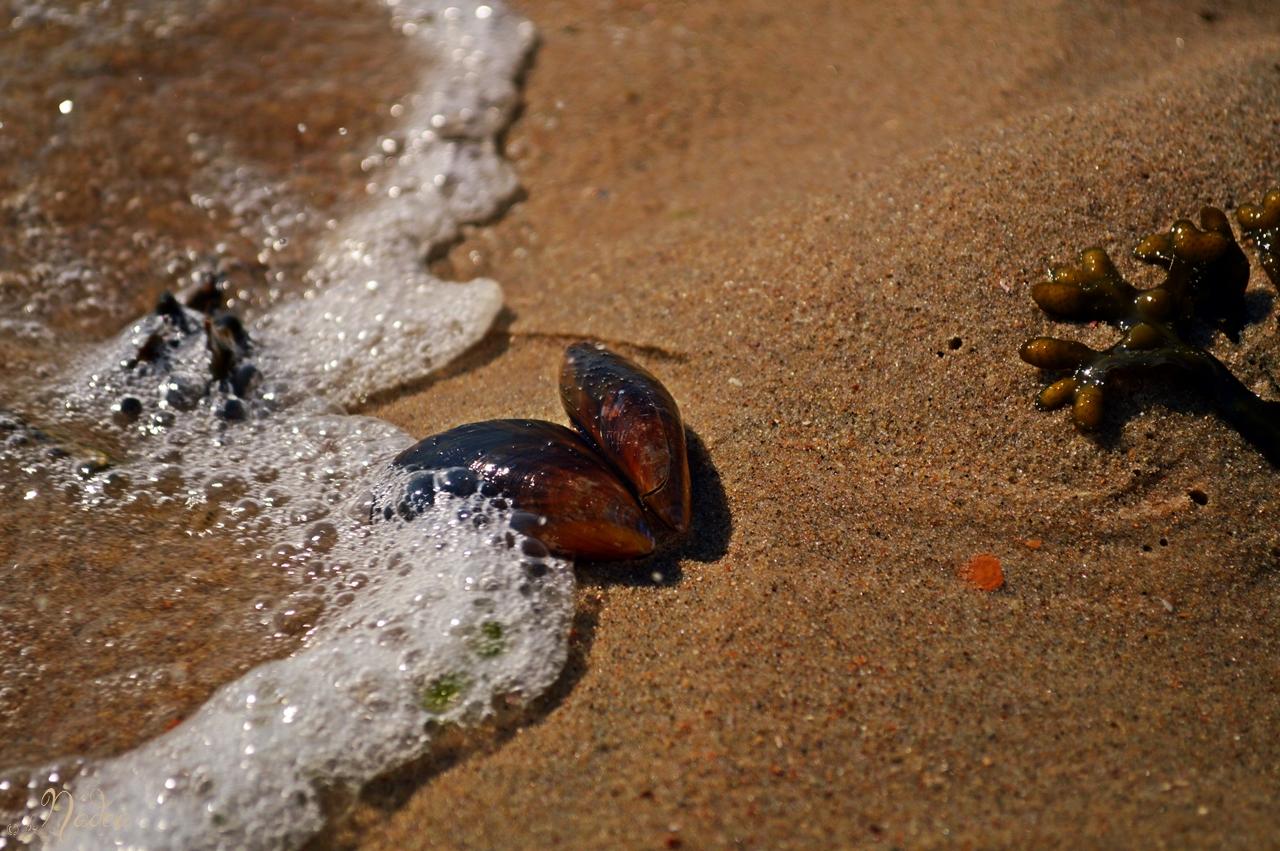 Meeresidylle