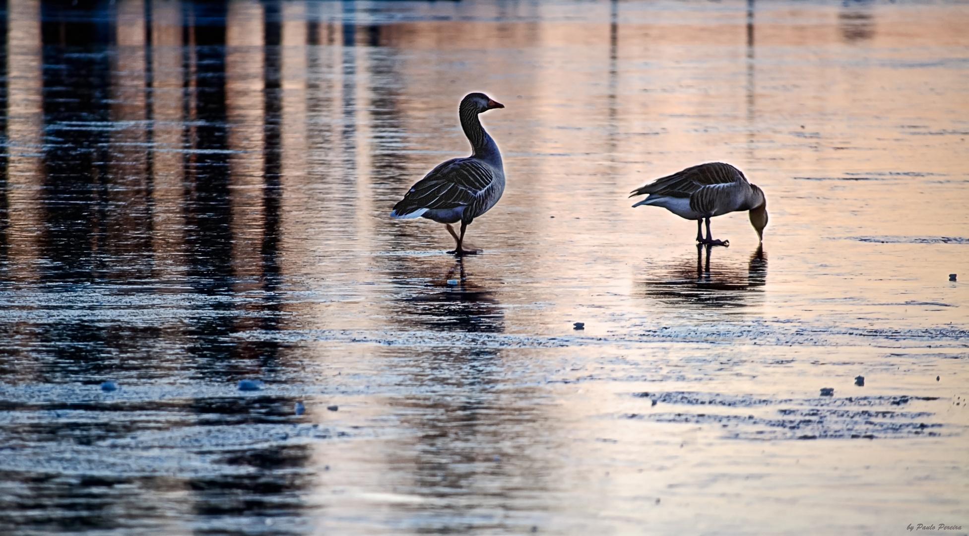 meeting on ice