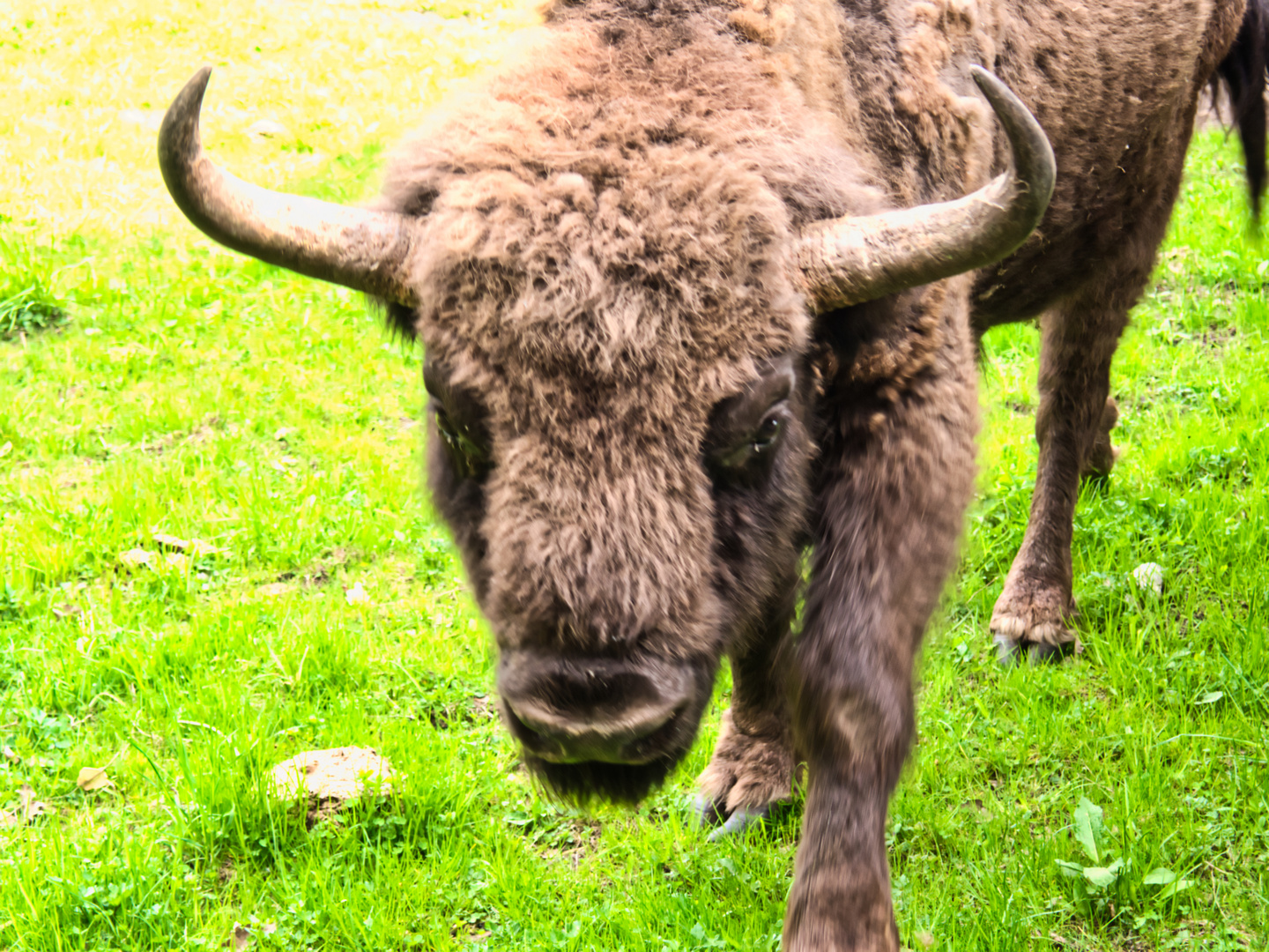 Meeting with Bison