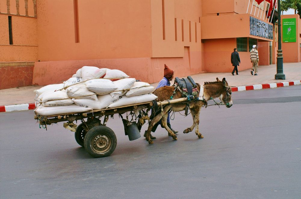 Mehltransport
