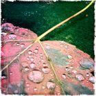 mehr bunter Herbst