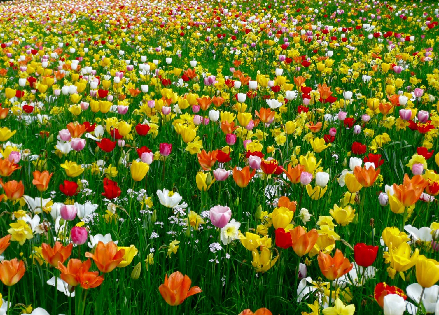 Mehr Frühling geht nicht