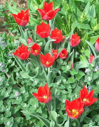 Mehr Gartenbilder Foto Bild Pflanzen Pilze Flechten Blüten