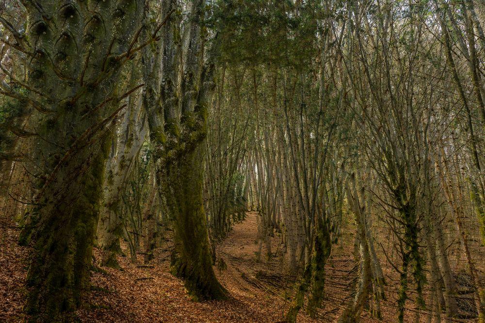Mehr Wald..