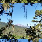 mehr Wald wie Teide
